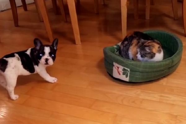 Il gatto ruba la cuccia al cane la reazione for Chi va a roma perde la poltrona